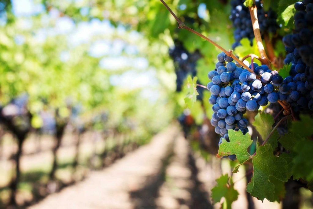 vinograd iz bespovratnih sredstava